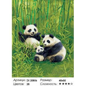 Количество цветов и сложность Очаровательные панды Раскраска картина по номерам на холсте ZX 20856