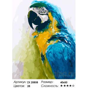 Синий попугай Раскраска картина по номерам на холсте ZX 20858