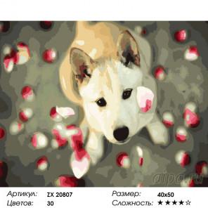 Количество цветов и сложность Собака в лепестках Раскраска картина по номерам на холсте ZX 20807