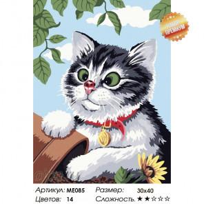 Любопытный котенок Раскраска картина по номерам на холсте