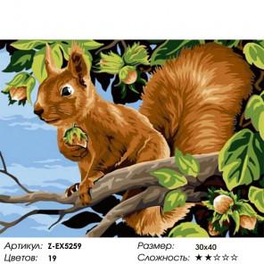 Количество цветов и сложность Белочка с орешками Раскраска картина по номерам на холсте Z-EX5259
