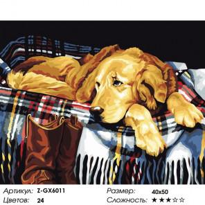 Количество цветов и сложность Лабрадор в ожидании прогулки Раскраска картина по номерам на холсте Z-GX6011