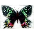 Бабочка Урания Мадагаскарская Картина из шерсти с рамкой