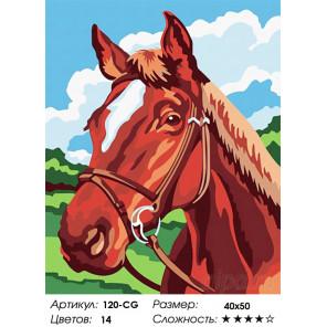 Количество цветов и сложность  Жеребенок Раскраска картина по номерам на холсте Белоснежка 120-CG