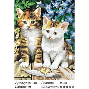 Котята Раскраска картина по номерам на холсте Белоснежка