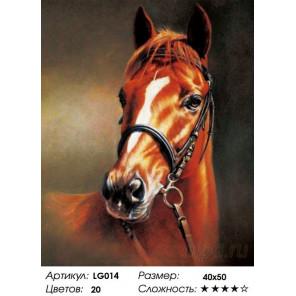 Количество цветов и сложнсоть Каштановая лошадь Алмазная мозаика на подрамнике LG014