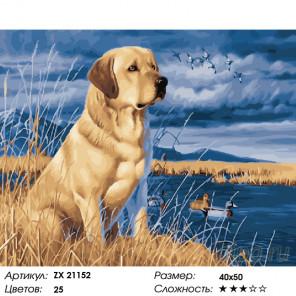 Лабрадор на берегу Раскраска картина по номерам на холсте