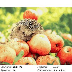 Яблочный урожай Раскраска картина по номерам на холсте