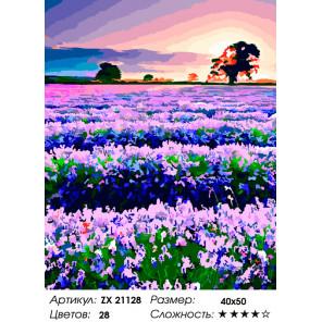Лавандовое поле в Провансе Раскраска картина по номерам на холсте