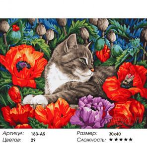 Сложность и количество красок Кот в маках Раскраска картина по номерам на холсте Белоснежка 183-AS
