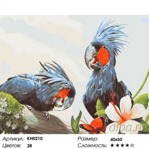 Количество цветов и сложность Попугаи Раскраска картина по номерам на холсте KH0210