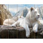 Белый лев Картина по номерам на дереве KD0061