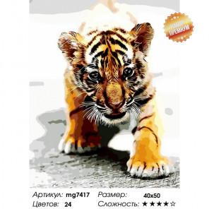 Тигренок Раскраска картина по номерам на холсте