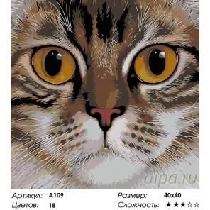 Количество цветов и сложность Медовые глаза Раскраска картина по номерам на холсте A109