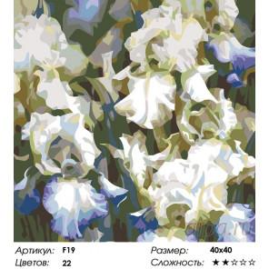Количество цветов и сложность Белые ирисы Раскраска картина по номерам на холсте F19