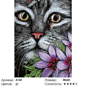 Количество цветов и сложность Котик Раскраска картина по номерам на холсте A164