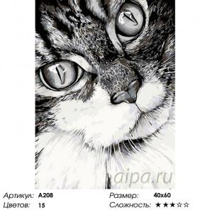 Количество цветов и сложность Кошачий взгляд Раскраска картина по номерам на холсте A208