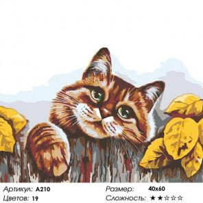 Количество цветов и сложность Деревенский кот Раскраска картина по номерам на холсте A210