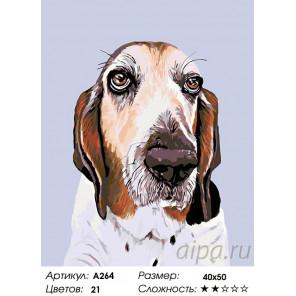 Количество цветов и сложность Франклин Раскраска картина по номерам на холсте A264