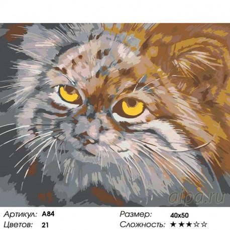 A84 Манул Раскраска картина по номерам на холсте 40х50 см ...