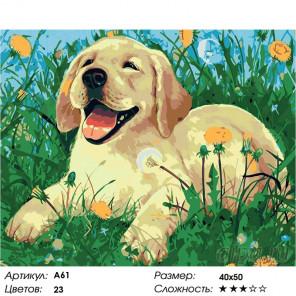 Количество цветов и сложность Щенок на прогулке Раскраска картина по номерам на холсте A61