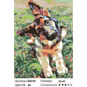Количество цветов и сложность Овчарка Раскраска картина по номерам на холсте RA018