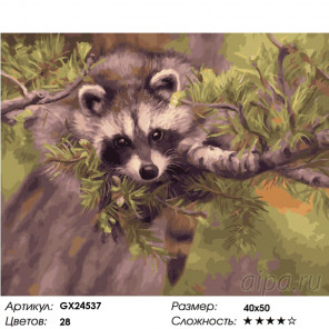 Количество цветов и сложность Милый енот Раскраска картина по номерам на холсте GX24537