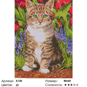 Котенок в весенних цветах Раскраска по номерам на холсте Живопись по номерам A120