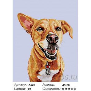 Количество цветов и сложность Внимательный пес Раскраска по номерам на холсте Живопись по номерам A221