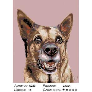 Количество цветов и сложность Служебный пес Раскраска по номерам на холсте Живопись по номерам A223
