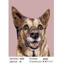 Служебный пес Раскраска по номерам на холсте Живопись по номерам
