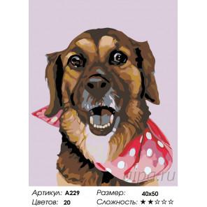 Количество цветов и сложность Шарлотта Раскраска по номерам на холсте Живопись по номерам A229