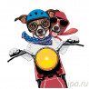 Парочка на мотоцикле Раскраска по номерам на холсте Живопись по номерам A401