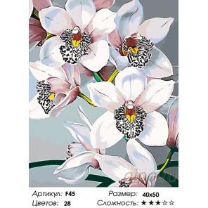 Стильные орхидеи Раскраска по номерам на холсте Живопись по номерам F45