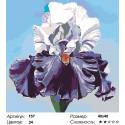 Количество цветов и сложность Пышный ирис Раскраска по номерам на холсте Живопись по номерам F57