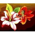 Цветы лилии Раскраска по номерам на холсте Iteso