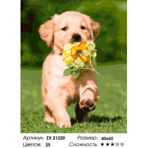 Количество цветов и сложность Смышленый щенок Раскраска картина по номерам на холсте ZX 21220