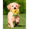 Смышленый щенок Раскраска картина по номерам на холсте ZX 21220