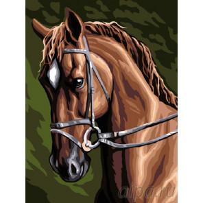 Гнедой красавец Раскраска картина по номерам на холсте EX5525