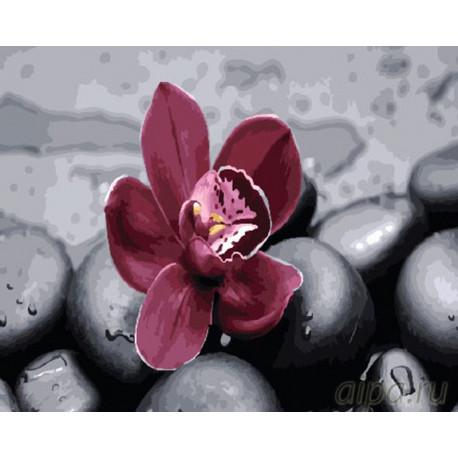 Орхидея на камнях Раскраска картина по номерам на холсте GX26622