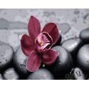 Орхидея на камнях Раскраска картина по номерам на холсте