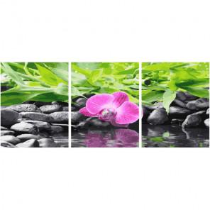 Орхидея на черных камнях Триптих Раскраска картина по номерам на холсте PX5187