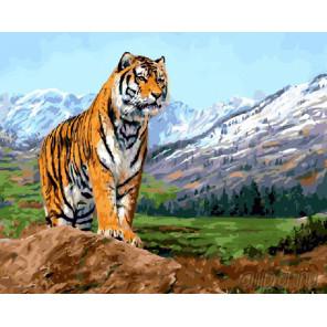 Тигр в горах Раскраска картина по номерам на холсте