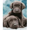 Грустные щенки Раскраска картина по номерам на холсте