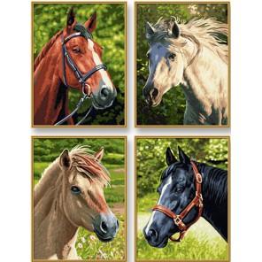 Лошади Раскраски по номерам Schipper (Германия)