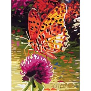 Бабочка на клевере Раскраска картина по номерам на холсте EX5081