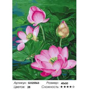 Красота лотоса Раскраска картина по номерам на холсте GX25563