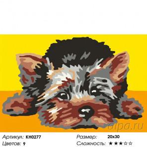 Количество цветов и сложность Лохматый щенок Раскраска по номерам на холсте Molly KH0277