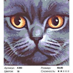 Количество цветов и сложность Кошачья мордочка Раскраска по номерам на холсте Живопись по номерам A383