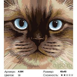Количество цветов и сложность Голубоглазая мордочка Раскраска по номерам на холсте Живопись по номерам A384